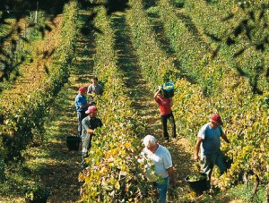 [cml_media_alt id='113469']Lamponi - In vino veritas (1)[/cml_media_alt]
